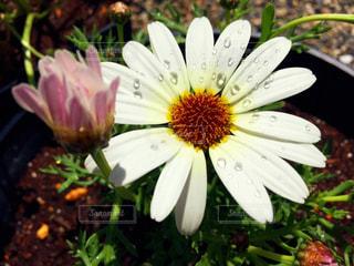花の写真・画像素材[1987691]