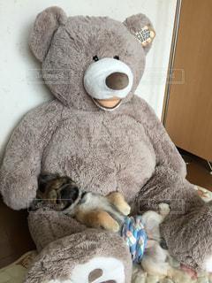 くまと愛犬♡の写真・画像素材[1995743]