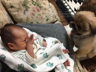 赤ちゃん・犬・私(グレー部分)笑の写真・画像素材[2009456]