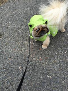 緑色コーデ?雨の日の散歩の写真・画像素材[2099388]