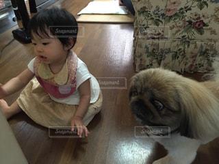 犬,動物,ペキニーズ,屋内,かわいい,女の子,洋服,床,いぬ,人物,人,座る,赤ちゃん,幼児,イタズラ,Tシャツ,夏服,半袖