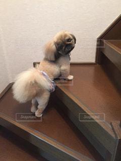階段チャレンジ?の写真・画像素材[2148993]