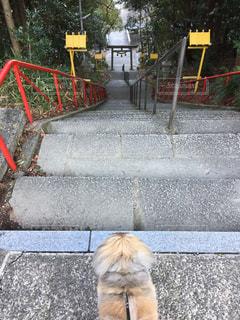 神社の階段の写真・画像素材[2149026]