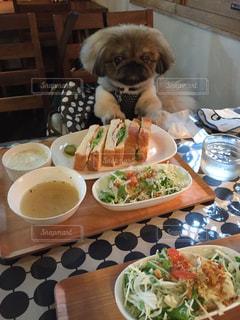 女子会+犬の写真・画像素材[2251573]