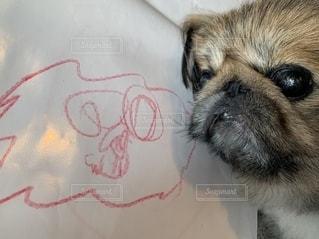 犬,動物,屋内,茶色,書類,ピンク色,紙,スケッチ,犬の絵,図面,データ,お孫ちゃんの絵