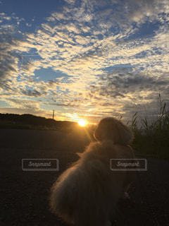 犬,自然,風景,空,動物,屋外,太陽,雲,夕暮れ,光