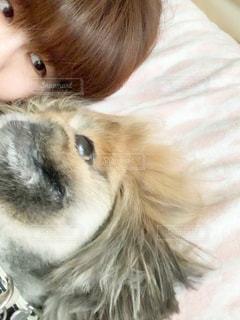 愛犬といつもの朝の写真・画像素材[3101736]