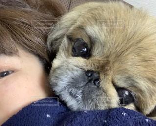 私と愛犬の写真・画像素材[3101747]