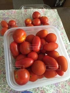 食べ物,屋内,赤,トマト,野菜,プランター,食品,甘い,美味しい,プチトマト,食材,フレッシュ,とれたて,ベジタブル,アイコ