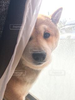犬の写真・画像素材[2165788]