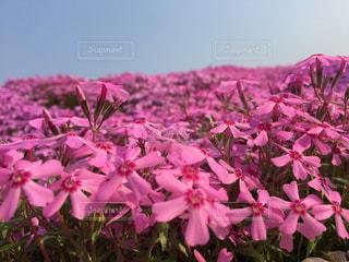 植物にピンクの花の写真・画像素材[1916080]