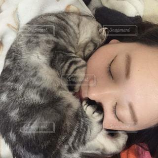 猫,動物,屋内,マフラー,昼寝,ペット,子猫,赤ちゃん,グレー,睡眠,ほかほか,キティ,ネコ
