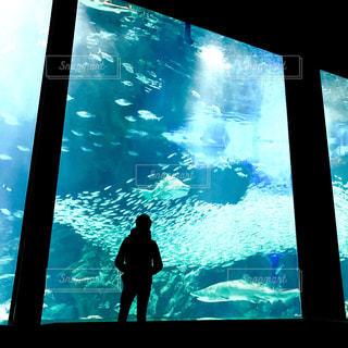 男性,カップル,魚,青,後ろ姿,水,室内,水族館,水面,影,泳ぐ,シルエット,人物,背中,人,後姿,ブルー,男の子,デート,彼氏,見る,フォトジェニック,彼,インスタ映え