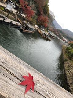 自然,空,秋,紅葉,屋外,赤,葉っぱ,散歩,川,もみじ,外,レジャー,デート,お散歩,外出,ライフスタイル,おでかけ,お出かけ,カエデ