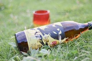 草の上に座っている鳥カバー フィールドの写真・画像素材[1444400]