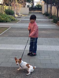 犬,屋外,散歩,女の子,7歳,犬と女の子,7才