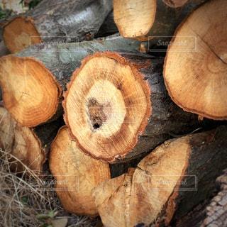 自然,屋外,断面,樹木,ハート,木材,材木,丸太,置場,「ミルクティー色」,「茶色」,「ミルクティーフォト」