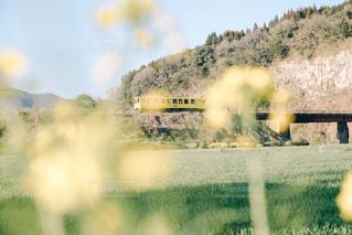 春色の電車の写真・画像素材[1835531]