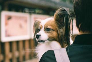 犬の写真・画像素材[2046297]