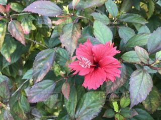 この花の写真・画像素材[1939333]