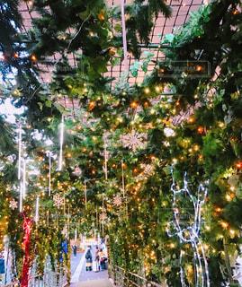 東京のクリスマスの写真・画像素材[1935990]