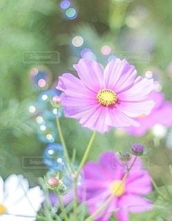 花をクローズアップするの写真・画像素材[2782070]