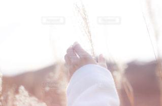 ススキと女性の手の写真・画像素材[2798399]