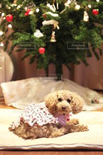 ベッドに座っている犬の写真・画像素材[2823690]