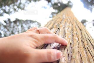 木に触れる手元の写真・画像素材[2870458]
