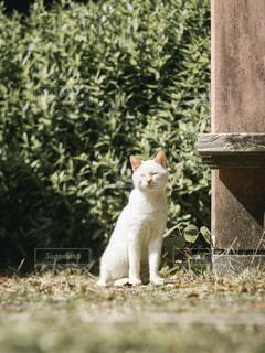 猫,公園,動物,屋外,白,ペット,人物,白猫,幸せ,cat,日向ぼっこ,ひなたぼっこ,あったかい,表情,ネコ