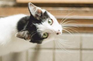 猫,動物,ペット,人物,cat,瞳,ネコ