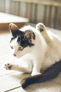 猫,動物,ペット,人物,肉球,ネコ