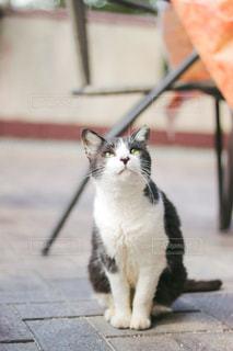猫,動物,見上げる,ペット,人物,ネコ,座る猫