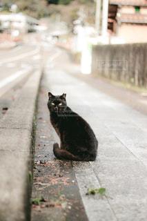 猫,動物,ペット,人物,外,道,黒猫,ネコ