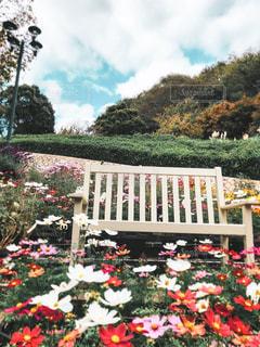 白いベンチとお花の写真・画像素材[3029452]