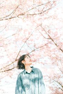 桜と女性の写真・画像素材[3033487]