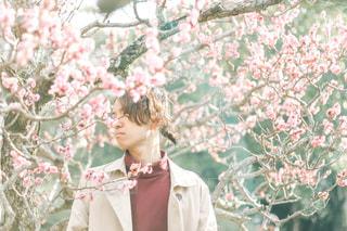 梅の花と男性の写真・画像素材[3048719]