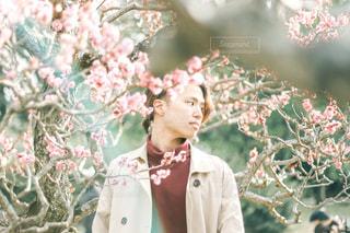 梅の花と横顔の男性の写真・画像素材[3048718]