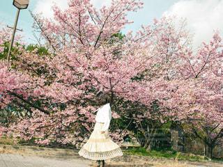 河津桜と女の子の写真・画像素材[3104089]
