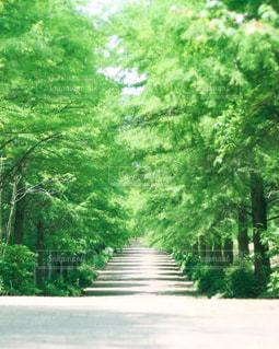 綺麗な緑の並木道の写真・画像素材[3139988]
