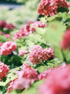 花のクローズアップの写真・画像素材[3377355]
