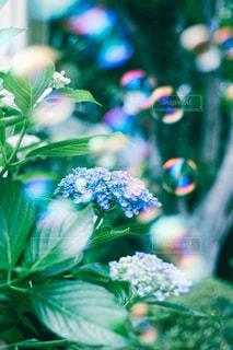 花のクローズアップの写真・画像素材[3377356]
