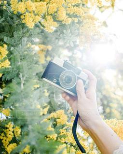 カメラを持つ手の写真・画像素材[3383499]
