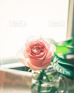 花のクローズアップの写真・画像素材[3402708]