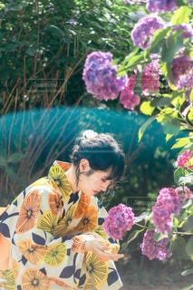 紫陽花と浴衣の女性の写真・画像素材[3516715]