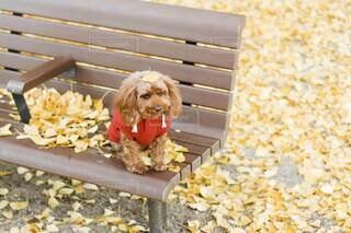 ベンチの上に座っている犬の写真・画像素材[3720923]