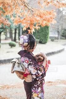 犬,秋,イベント,和服,トイプードル,お祝い,晴れ着,愛犬,成人式,20歳,和装,行事,成人の日