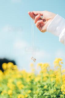 ネックレスと菜の花の写真・画像素材[4251509]