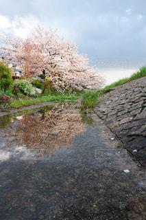 花,雨,屋外,水,雨上がり,梅雨,天気,色,雨の日,フォトジェニック