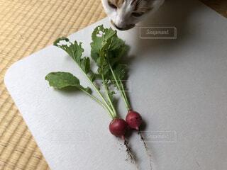 猫,食べ物,野菜,ラディッシュ,食品,新鮮,収穫,食材,フレッシュ,ベジタブル,二十日大根